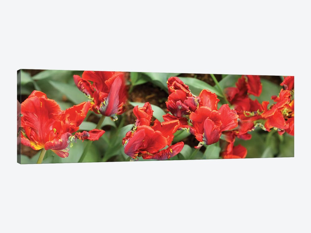 Close-Up Of Red Tulip Flowers I by Panoramic Images 1-piece Canvas Artwork