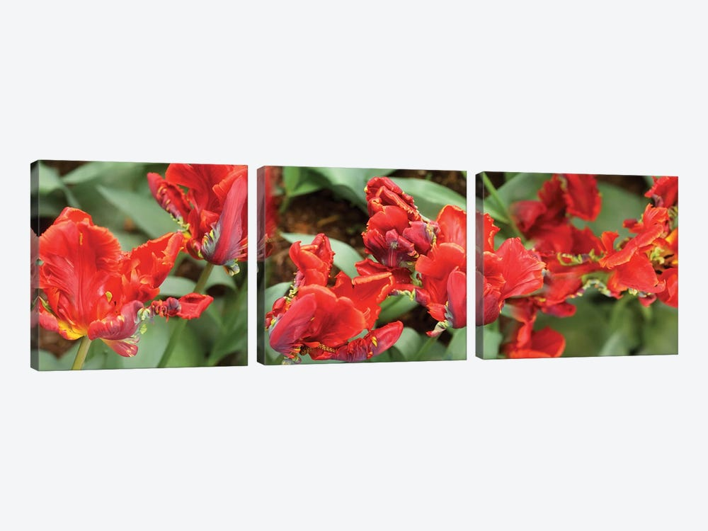 Close-Up Of Red Tulip Flowers I by Panoramic Images 3-piece Canvas Wall Art