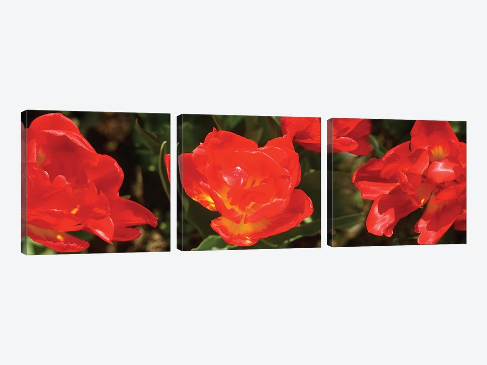 Close-Up Of Red Tulip Flowers II by Panoramic Images 3-piece Canvas Art Print