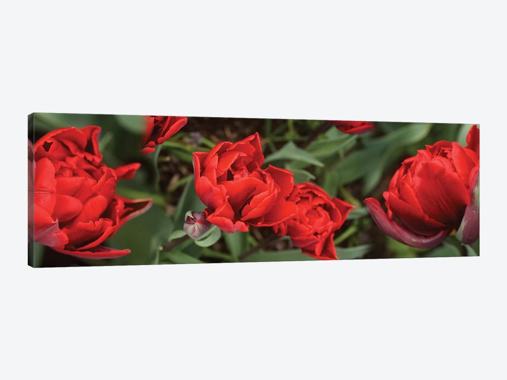 Close-Up Of Red Tulip Flowers V by Panoramic Images 1-piece Canvas Art Print