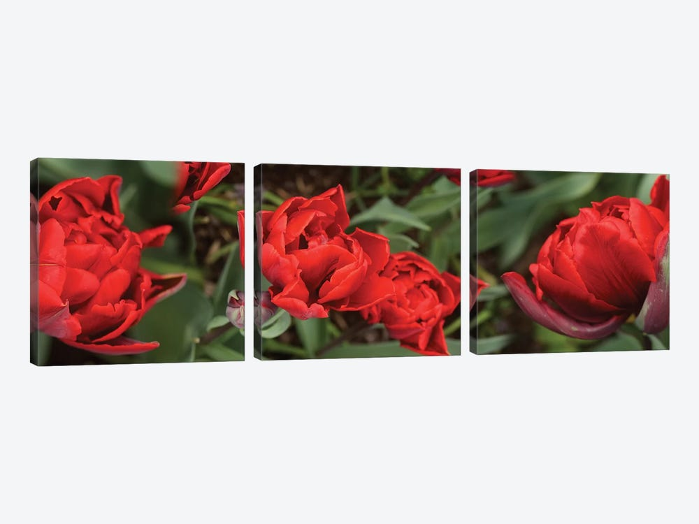 Close-Up Of Red Tulip Flowers V by Panoramic Images 3-piece Art Print