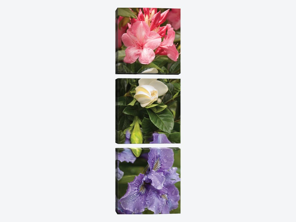 Close-Up Of Rhododendron And Iris Flowers by Panoramic Images 3-piece Canvas Wall Art