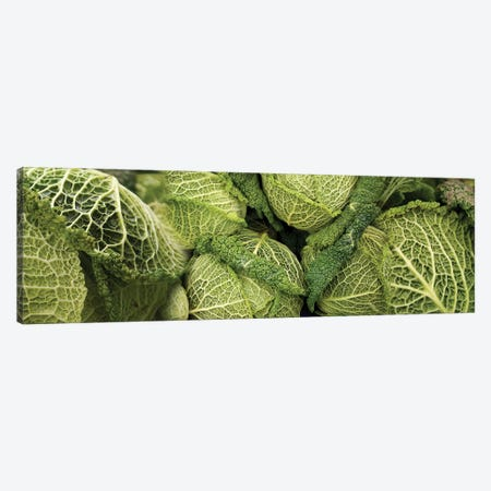 Close-Up Of Savoy Cabbages Growing On Plant 3-Piece Canvas #PIM14534} by Panoramic Images Canvas Artwork