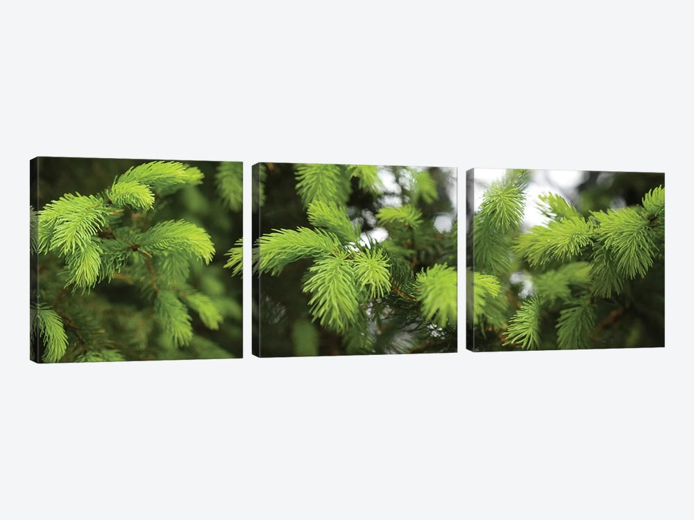 Close-Up Of Spring Conifers Plants by Panoramic Images 3-piece Art Print
