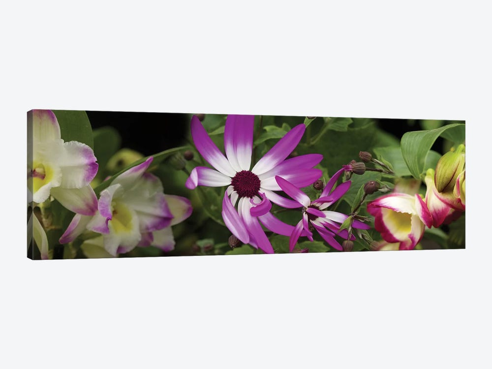 Close-Up Of Springtime Flowers by Panoramic Images 1-piece Canvas Wall Art