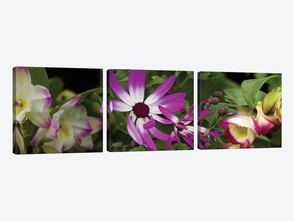 Close-Up Of Springtime Flowers by Panoramic Images 3-piece Canvas Wall Art