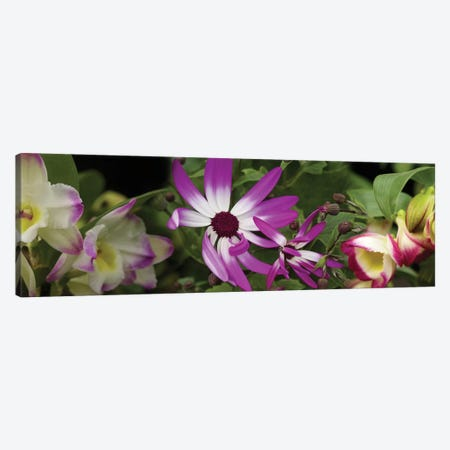 Close-Up Of Springtime Flowers Canvas Print #PIM14537} by Panoramic Images Canvas Artwork