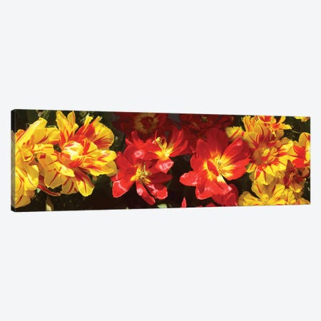 Close-Up Of Vibrant Color Tulip Flowers Canvas Print #PIM14542} by Panoramic Images Canvas Wall Art