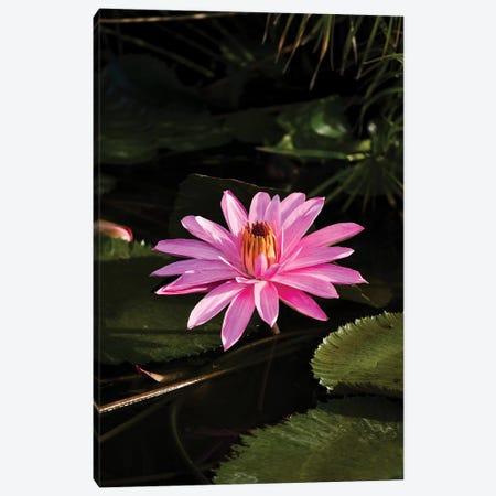 Close-Up Of Water Lily Flower, Moorea, Tahiti, French Polynesia I 3-Piece Canvas #PIM14543} by Panoramic Images Canvas Artwork