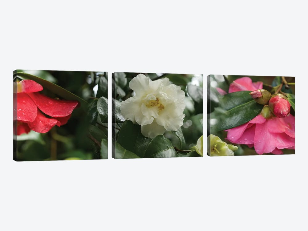 Close-Up Of Wet Spring Rhododendron Flowers by Panoramic Images 3-piece Canvas Art