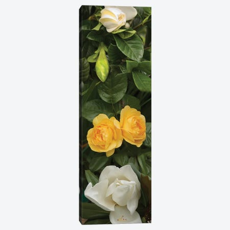 Close-Up Of White Poppies With Yellow Roses Canvas Print #PIM14549} by Panoramic Images Canvas Art