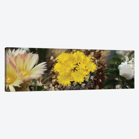 Close-Up Of Wildflowers Canvas Print #PIM14552} by Panoramic Images Canvas Print