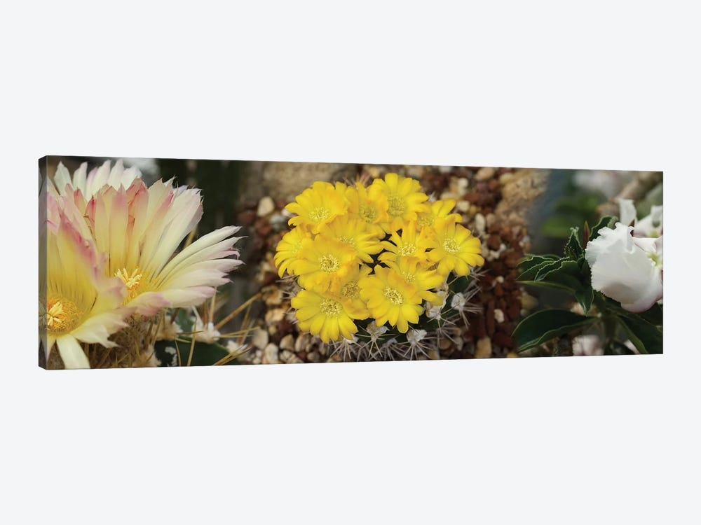 Close-Up Of Wildflowers by Panoramic Images 1-piece Canvas Print
