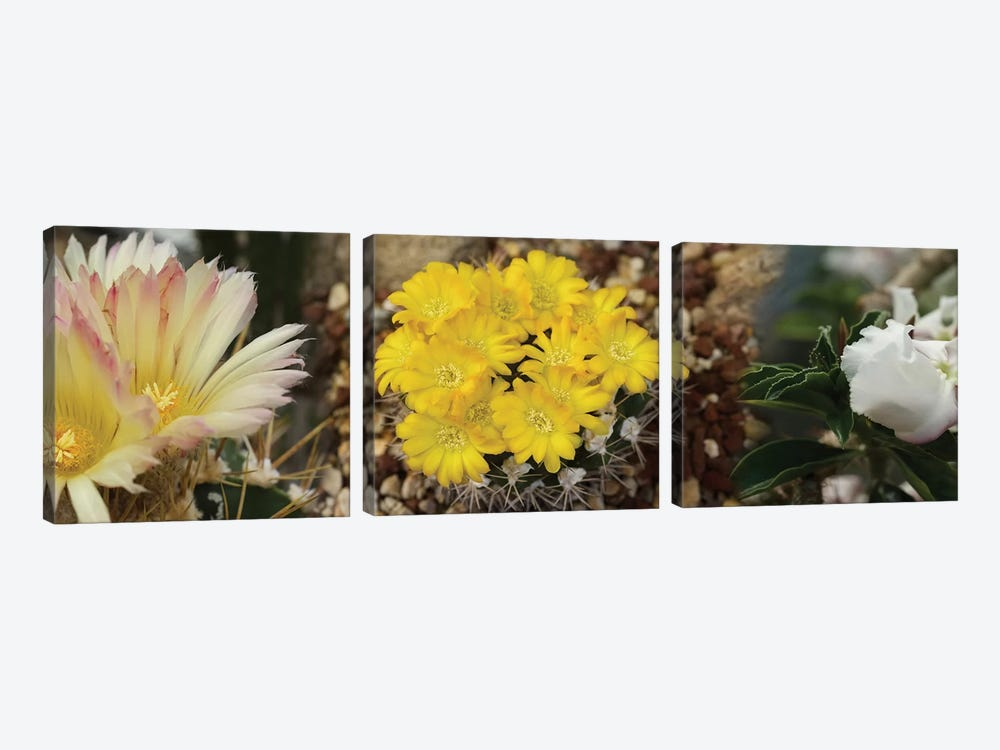 Close-Up Of Wildflowers by Panoramic Images 3-piece Canvas Print