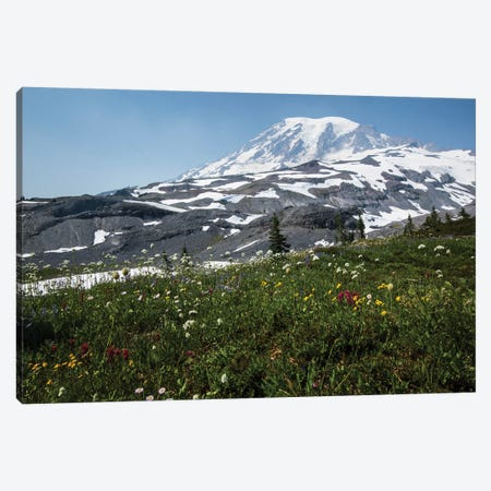 Close-Up Of Wildflowers, Mount Rainier National Park, Washington State, USA I Canvas Print #PIM14554} by Panoramic Images Canvas Art