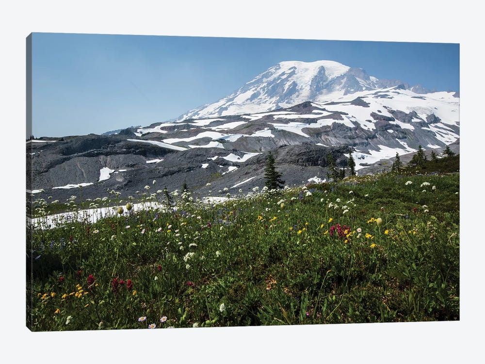 Close-Up Of Wildflowers, Mount Rainier National Park, Washington State, USA I by Panoramic Images 1-piece Canvas Print