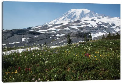 Close-Up Of Wildflowers, Mount Rainier National Park, Washington State, USA I Canvas Art Print