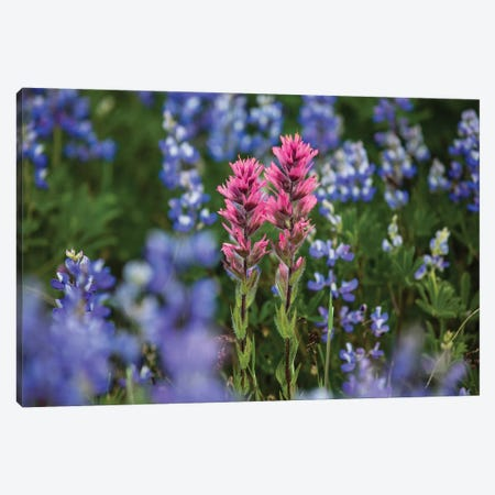 Close-Up Of Wildflowers, Mount Rainier National Park, Washington State, USA II Canvas Print #PIM14555} by Panoramic Images Canvas Wall Art