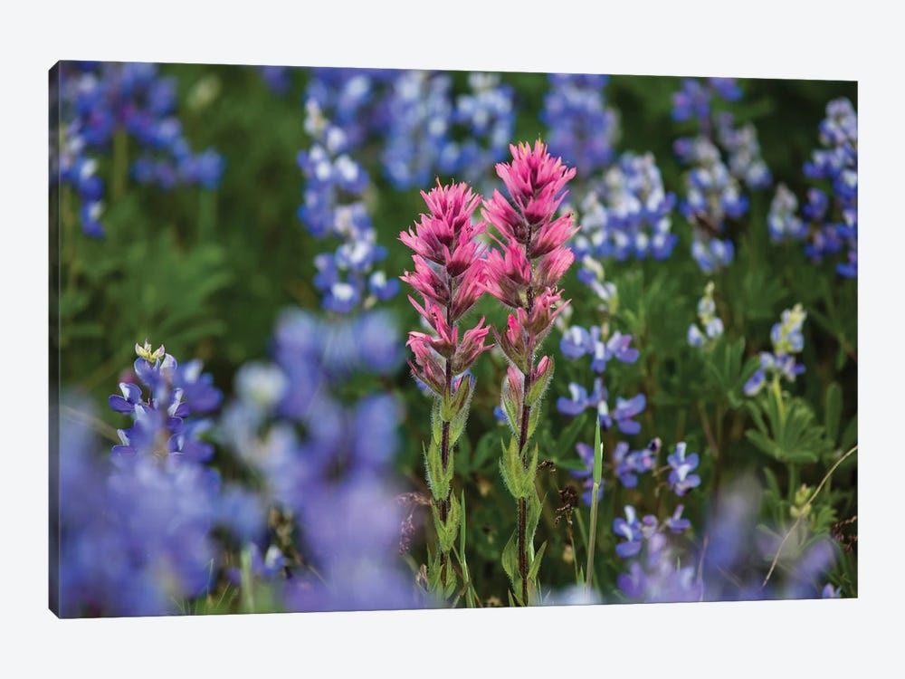 Close-Up Of Wildflowers, Mount Rainier National Park, Washington State, USA II by Panoramic Images 1-piece Canvas Art