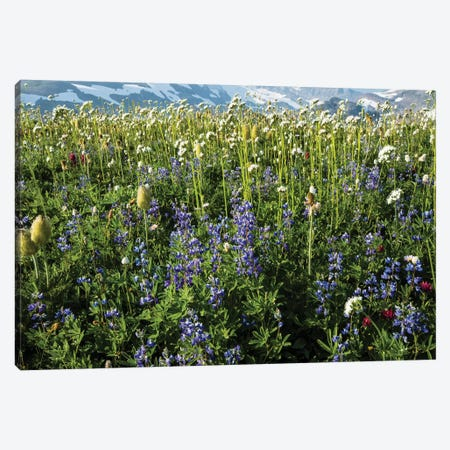 Close-Up Of Wildflowers, Mount Rainier National Park, Washington State, USA III Canvas Print #PIM14556} by Panoramic Images Canvas Art