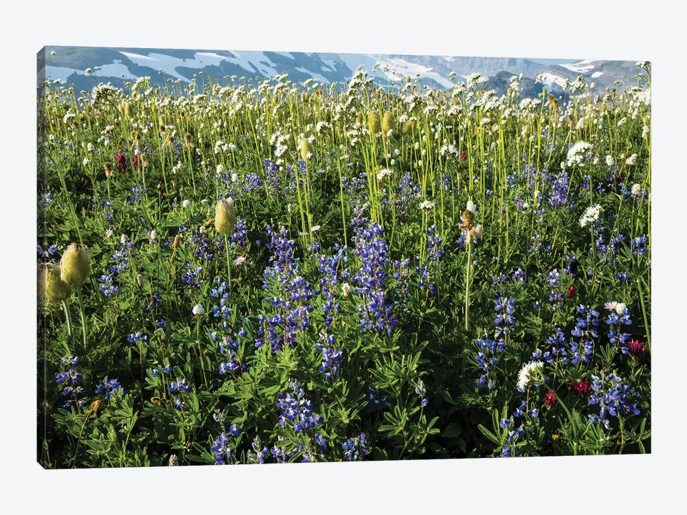 Close-Up Of Wildflowers, Mount Rainier National Park, Washington State, USA III by Panoramic Images 1-piece Canvas Art Print