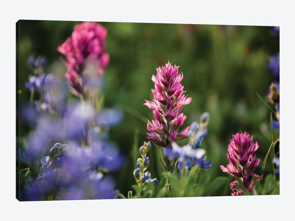 Close-Up Of Wildflowers, Mount Rainier National Park, Washington State, USA V by Panoramic Images 1-piece Canvas Print