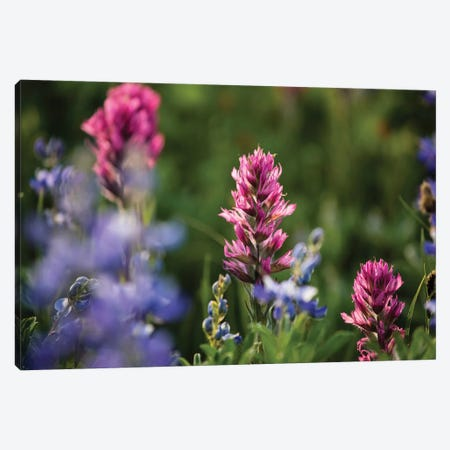 Close-Up Of Wildflowers, Mount Rainier National Park, Washington State, USA V 3-Piece Canvas #PIM14558} by Panoramic Images Canvas Print