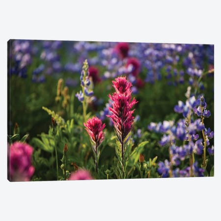 Close-Up Of Wildflowers, Mount Rainier National Park, Washington State, USA VI Canvas Print #PIM14559} by Panoramic Images Art Print