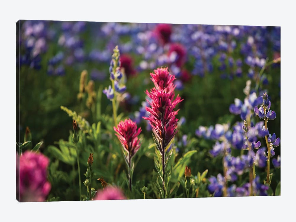 Close-Up Of Wildflowers, Mount Rainier National Park, Washington State, USA VI by Panoramic Images 1-piece Canvas Wall Art