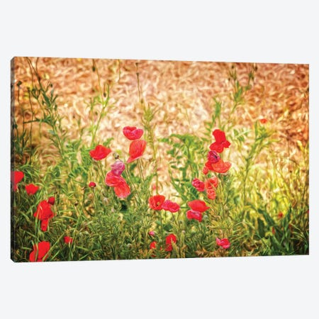 Close-Up Of Wilting Poppies 3-Piece Canvas #PIM14560} by Panoramic Images Canvas Art