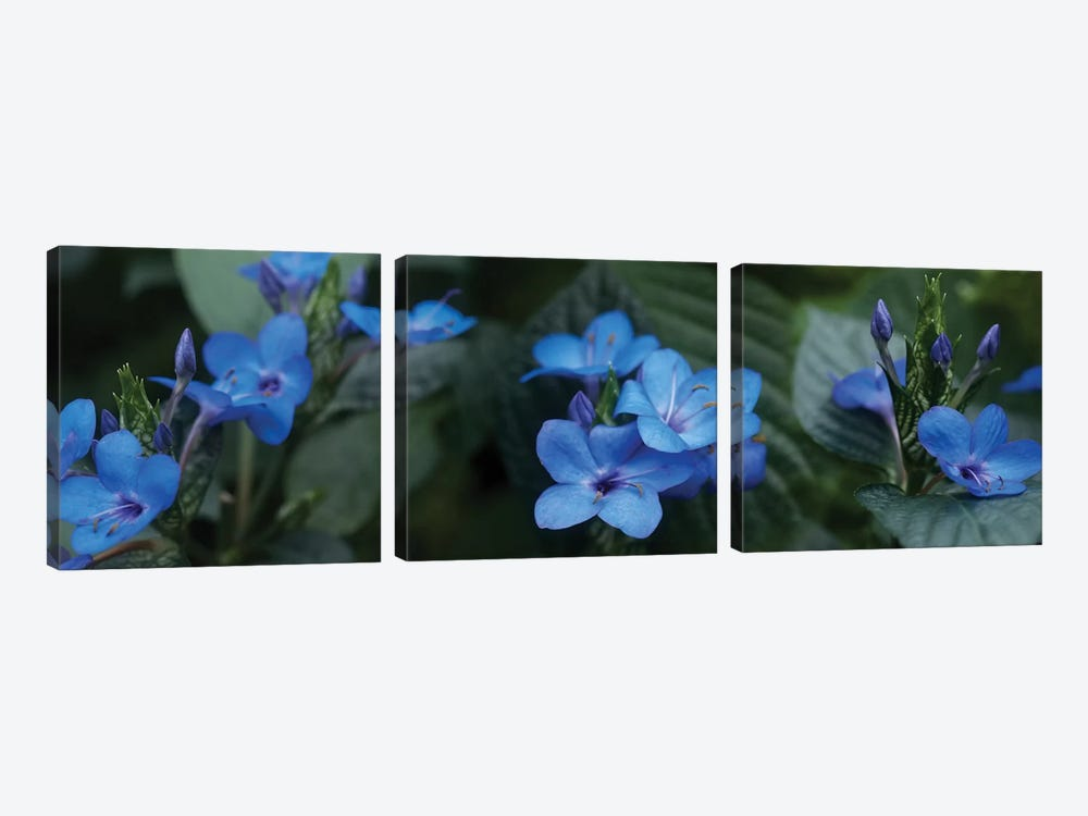 Close-Up Of Winter Blue Flowers by Panoramic Images 3-piece Canvas Art Print
