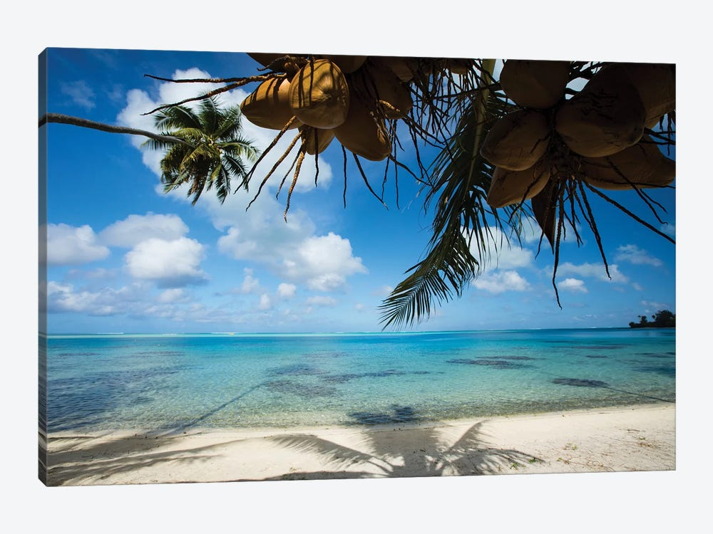 Coconuts Hanging On A Tree, Bora Bora, Society Islands, French Polynesia II by Panoramic Images 1-piece Canvas Artwork