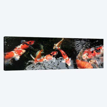 Colorful Koi Fish I Canvas Print #PIM14590} by Panoramic Images Canvas Print