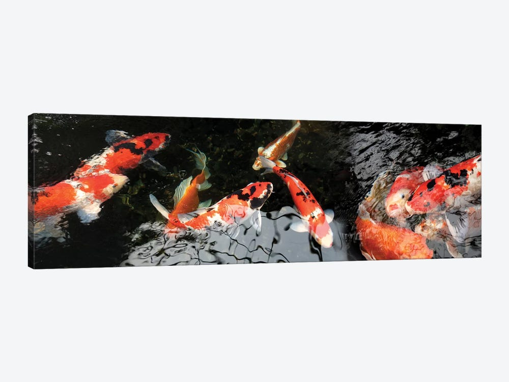 Colorful Koi Fish I by Panoramic Images 1-piece Art Print