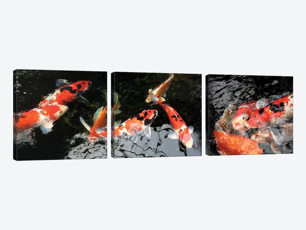 Colorful Koi Fish I by Panoramic Images 3-piece Canvas Art Print