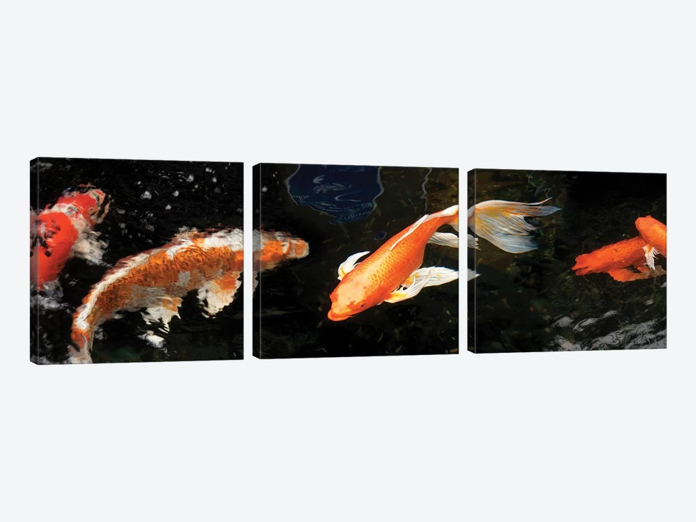 Colorful Koi Fish II by Panoramic Images 3-piece Canvas Art