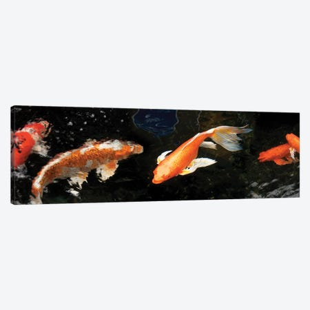 Colorful Koi Fish II Canvas Print #PIM14591} by Panoramic Images Canvas Print