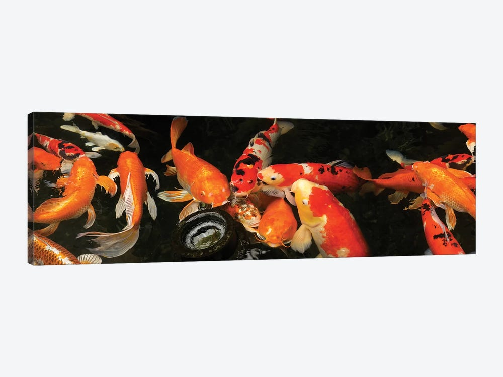 Colorful Koi Fish III by Panoramic Images 1-piece Canvas Print