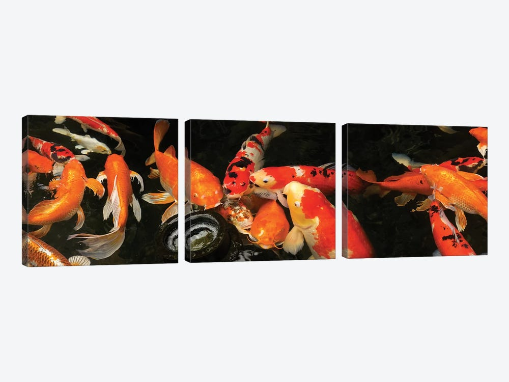 Colorful Koi Fish III by Panoramic Images 3-piece Canvas Print