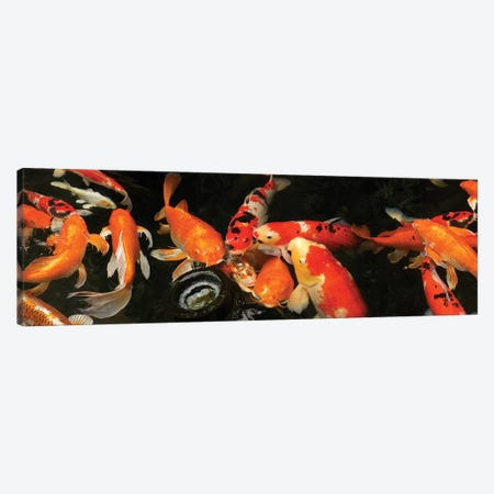 Colorful Koi Fish III Canvas Print #PIM14592} by Panoramic Images Canvas Print