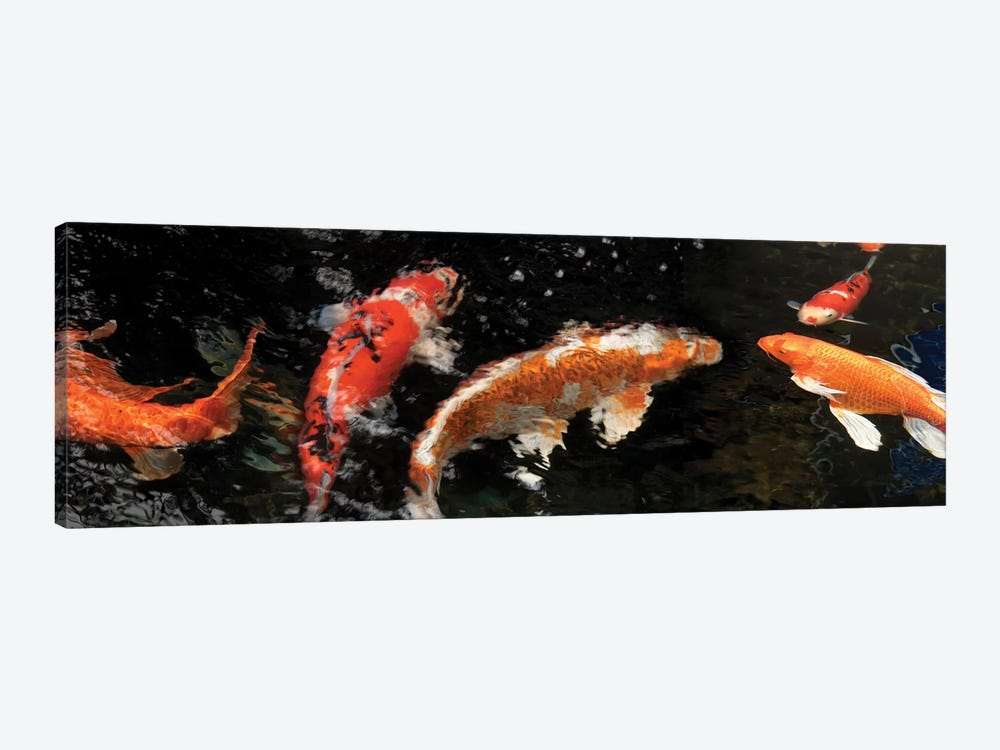 Colorful Koi Fish IV by Panoramic Images 1-piece Canvas Art
