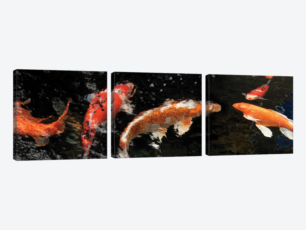 Colorful Koi Fish IV by Panoramic Images 3-piece Canvas Wall Art