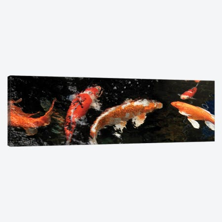 Colorful Koi Fish IV Canvas Print #PIM14593} by Panoramic Images Art Print