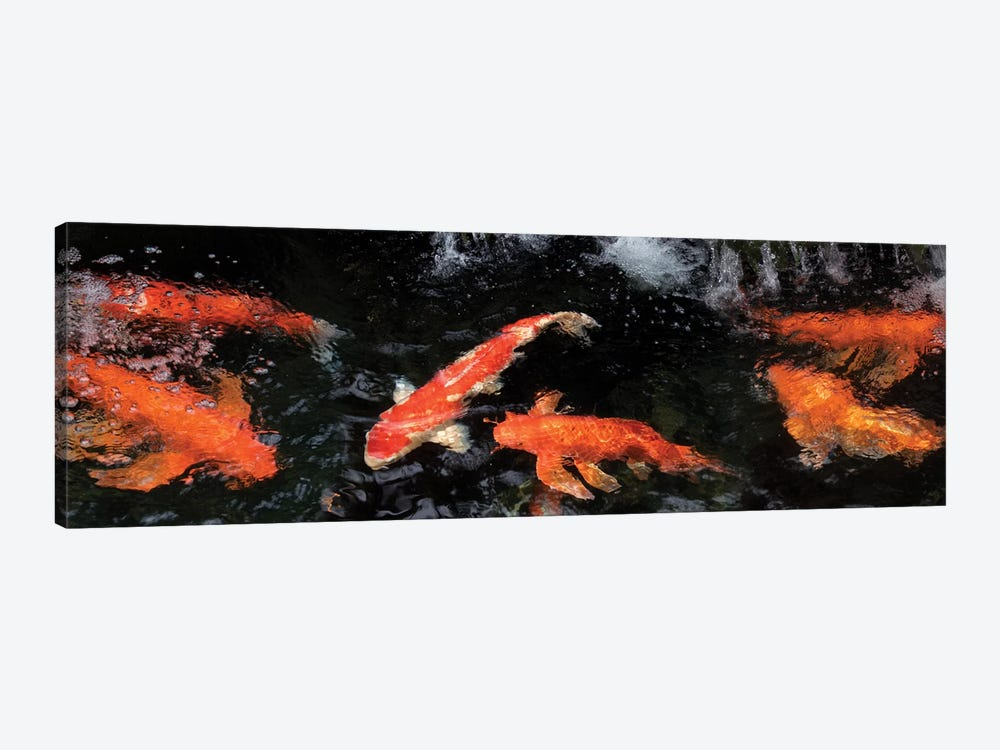 Colorful Koi Fish V by Panoramic Images 1-piece Art Print