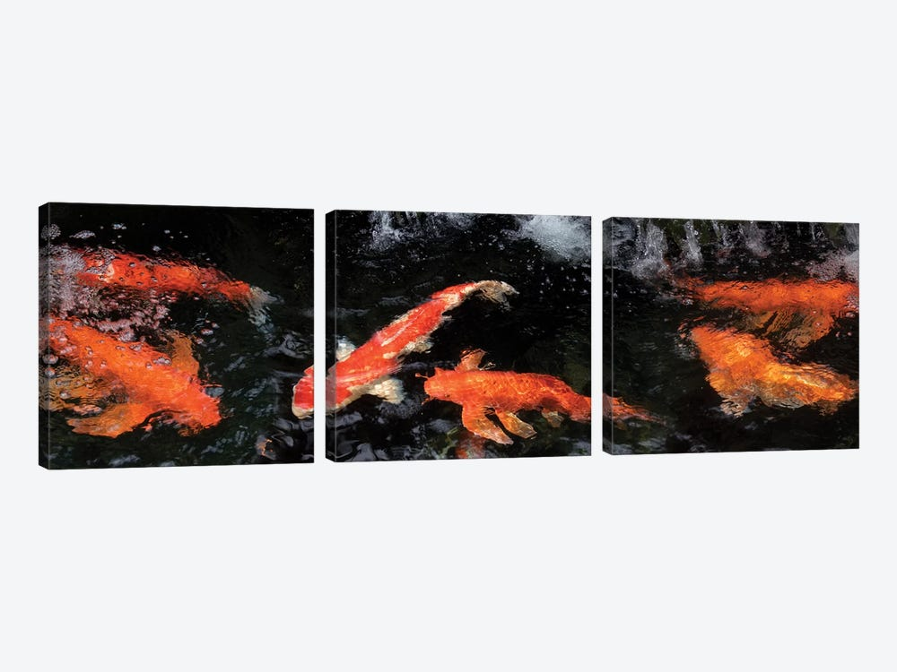Colorful Koi Fish V by Panoramic Images 3-piece Canvas Print
