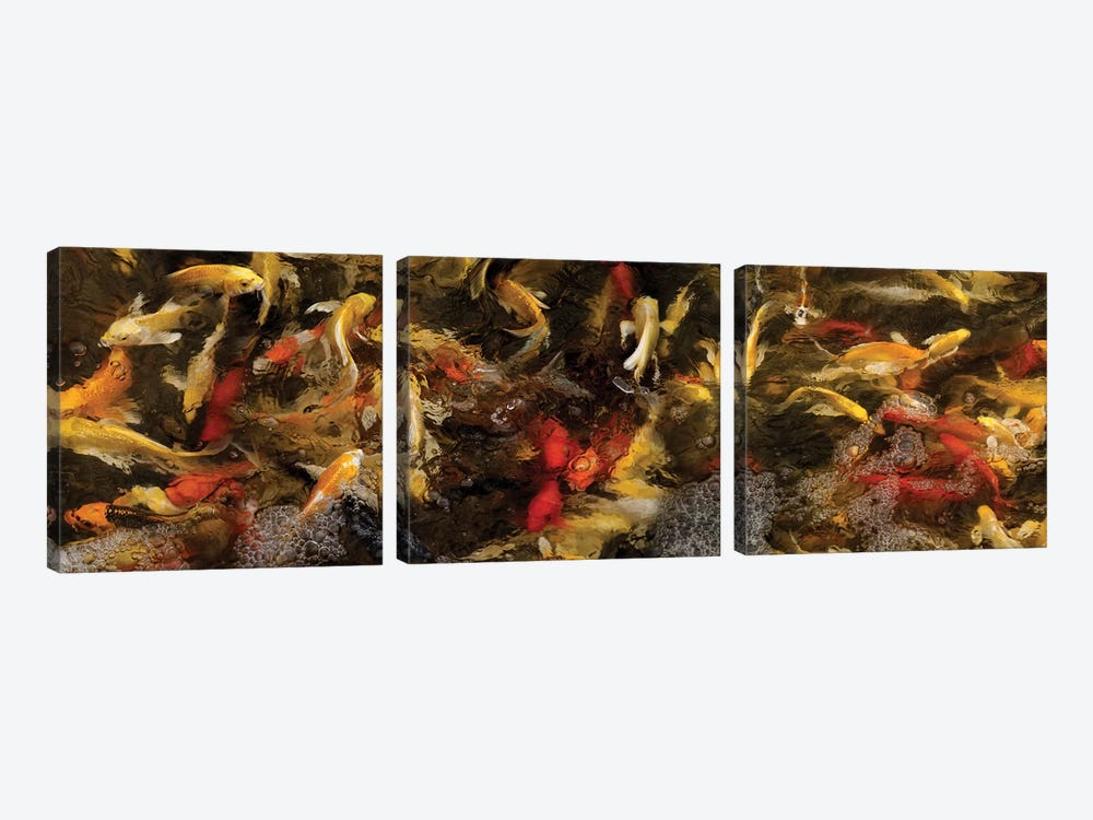 Colorful Koi Fish VI by Panoramic Images 3-piece Canvas Wall Art
