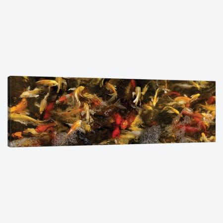 Colorful Koi Fish VI Canvas Print #PIM14595} by Panoramic Images Canvas Art