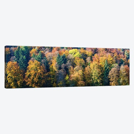 Colorful Trees In A Forest, Baden-Württemberg, Germany Canvas Print #PIM14596} by Panoramic Images Canvas Art