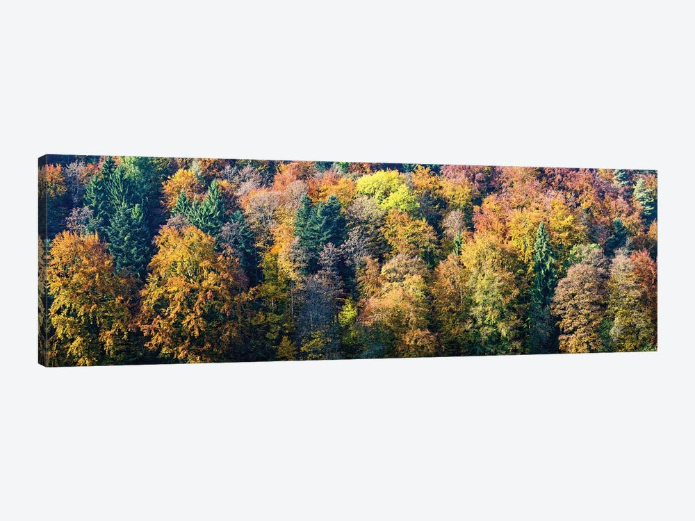 Colorful Trees In A Forest, Baden-Württemberg, Germany by Panoramic Images 1-piece Canvas Print
