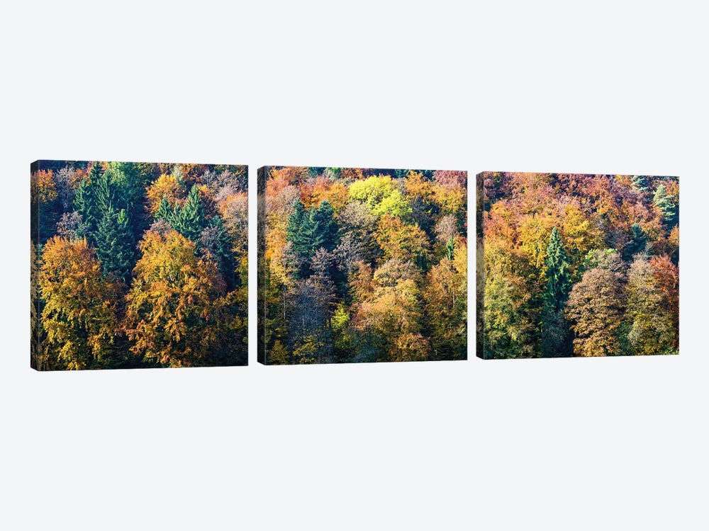 Colorful Trees In A Forest, Baden-Württemberg, Germany by Panoramic Images 3-piece Canvas Art Print